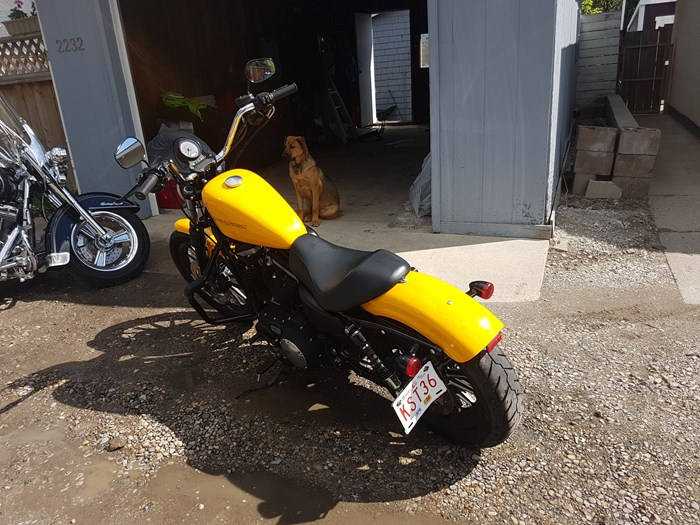 2011 Harley-Davidson Sportster Photo 2 of 4